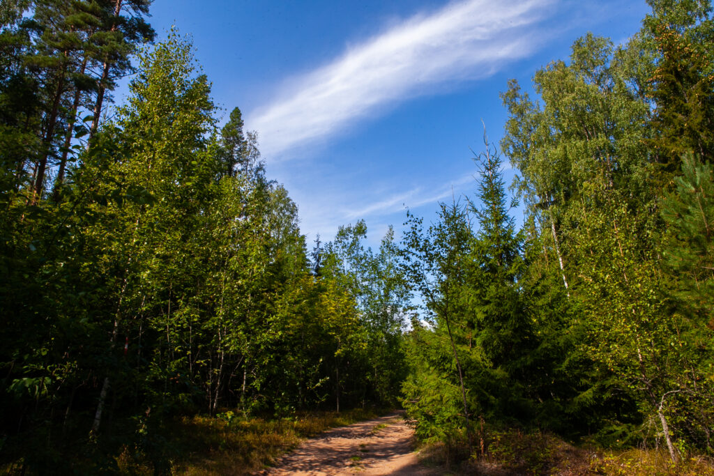 Экологические волонтеры облагородили «Каменистую тропу»